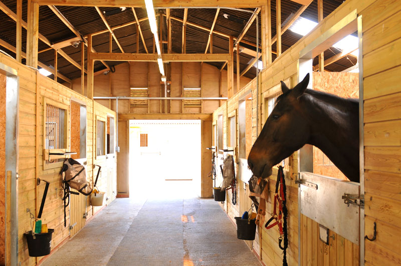 box chevaux